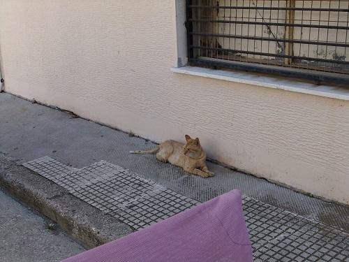 リムノス_ミリナの街で (2)