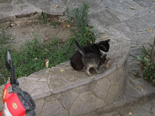 リムノス_宿から見た猫さん親子 (2)