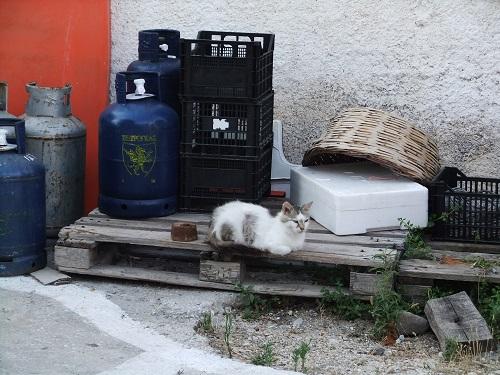 アギオス・エフストラティオスの猫さん (2)