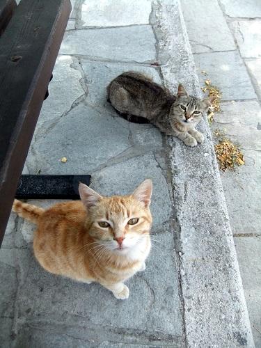 アギオス・エフストラティオスの猫さん (3)