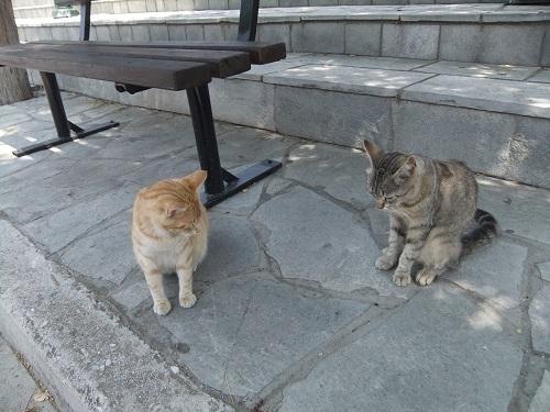 アギオス・エフストラティオスの猫さん (4)