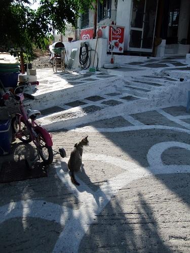 アギオス・エフストラティオスの猫さん (6)