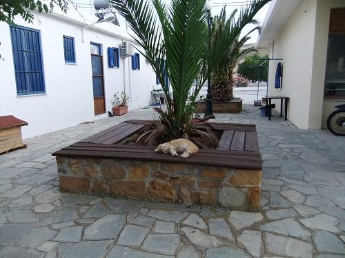 アギオス・エフストラティオスの猫さん (8)