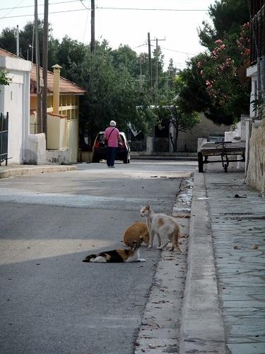 アギオス・エフストラティオスの猫さん (9)