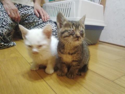 cat_60123_1.jpg