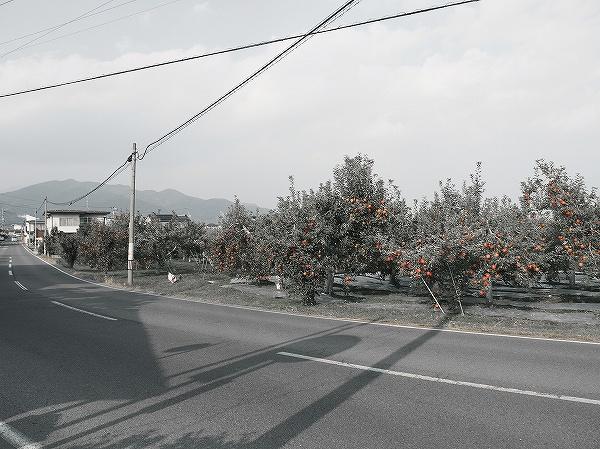 PA200532.jpg
