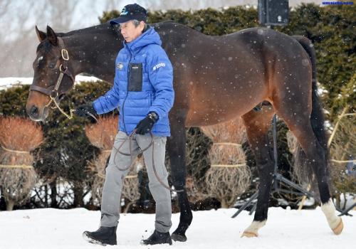 【競馬】ディープインパクトの種付け料がついに2500万に!