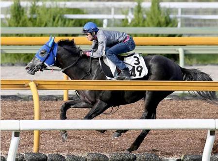 【競馬】エイシンヒカリは秋天勝つと思う?