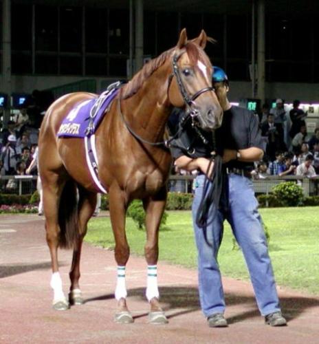 【競馬】種牡馬・サウスヴィグラスが結構すごい件