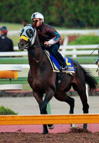 【競馬】キタサンブラック 母父サクラバクシンオー