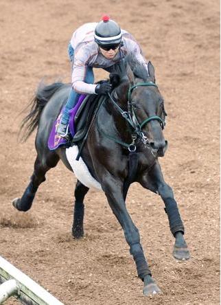 【競馬】ロゴタイプの「そろそろ勝つだろ感」は異常