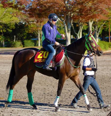 【競馬】最強牝馬・ルージュバック「今週出るんですが…」