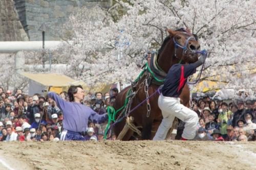 【競馬】騎手が鞭で馬を叩く動物虐待ってなんで許されてんの?