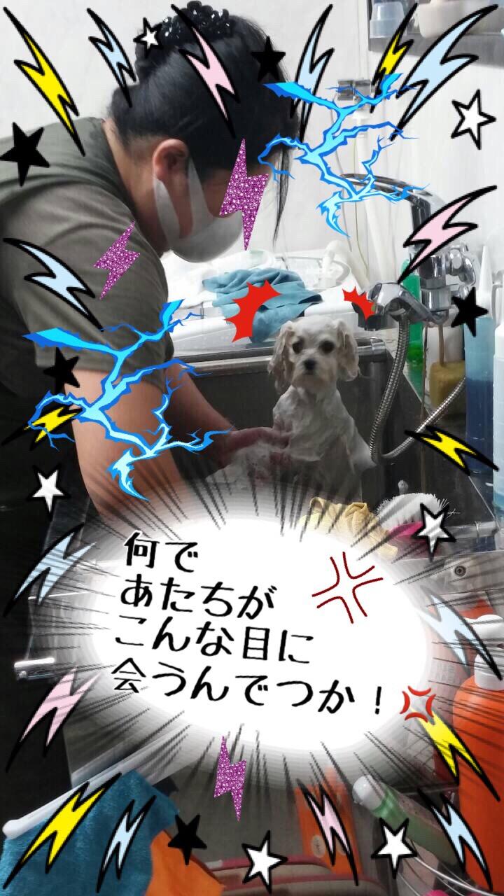 2015110917385330c.jpeg