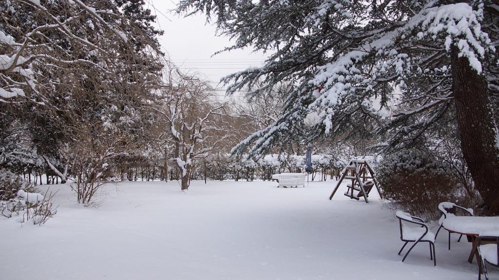 1月24日雪の山猫軒-3