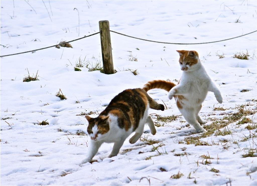 ネコも庭かけめぐる