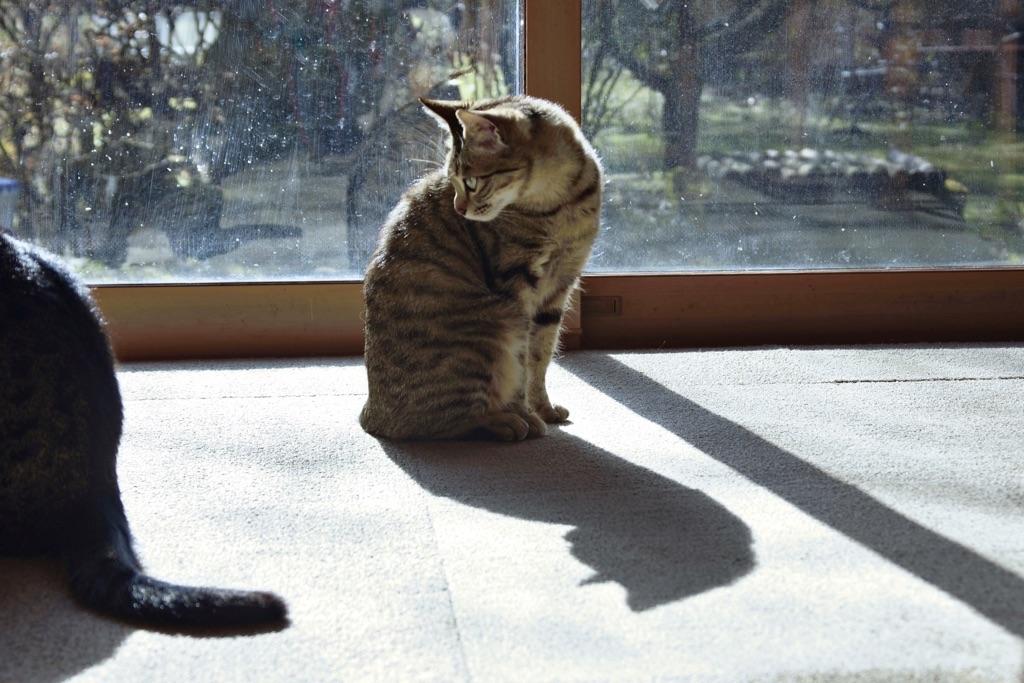 今朝のネコ-3