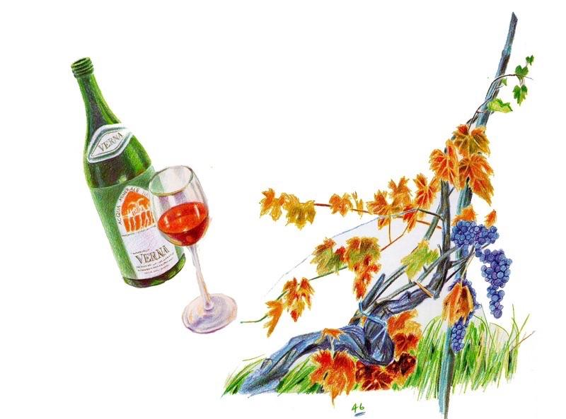 ワインと葡萄の木
