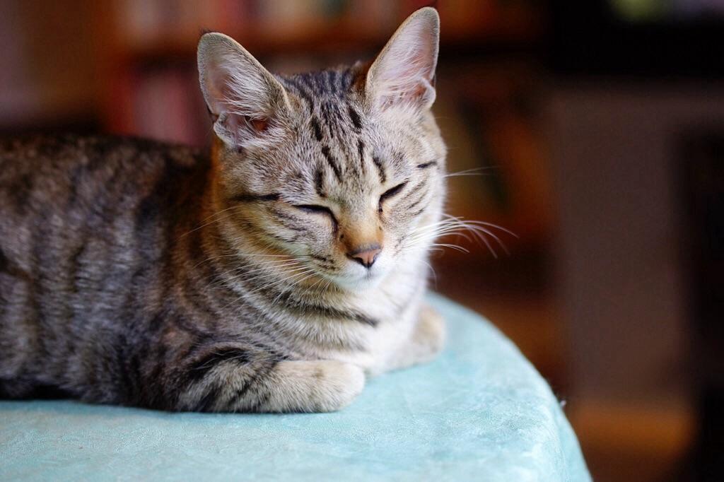 28.3.29日今日の猫写真-2