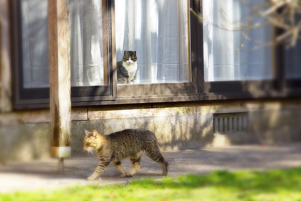 28.3.29日今日の猫写真-3