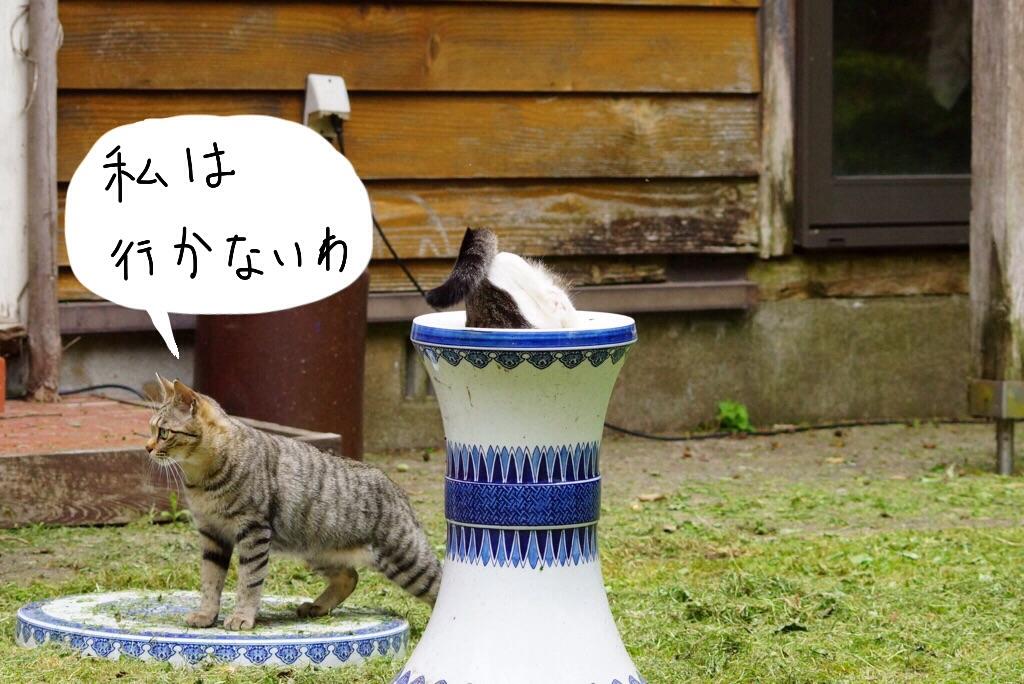 5月15日テンちゃん-4-2