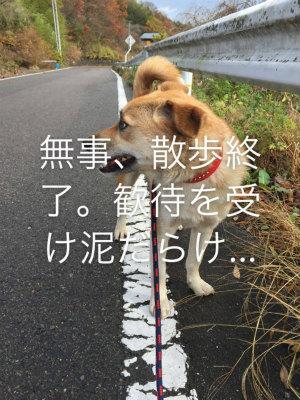 2015.11.15 都路・葛尾 くろさん