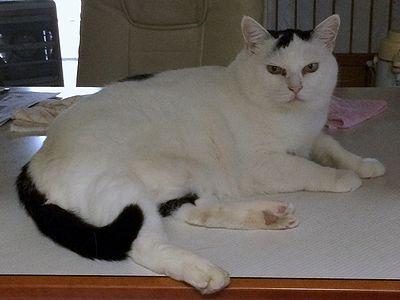 0901五十嵐さんち猫2