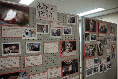 たま写真展 8