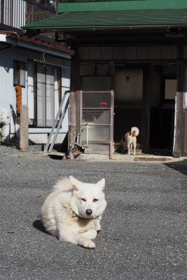2015.11.27 葛尾村 5