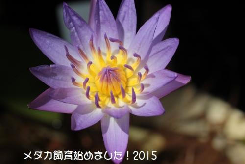 IMG_2322_20150824103411558.jpg