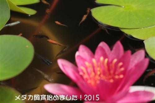 IMG_2518_20150824103423557.jpg