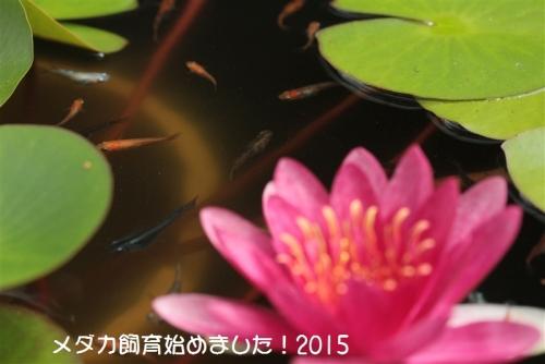 IMG_2520_20150824103645bcc.jpg