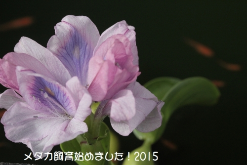 IMG_4214.jpg