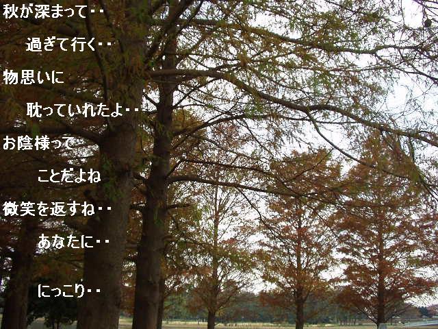 秋におもう1