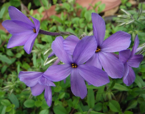 tsuruhanashinobu-sherwood-purple2-2016.jpg