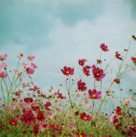 TOY-1025_Yashica.jpg
