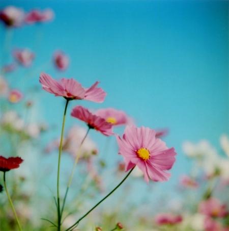 TOY-1036_Yashica.jpg