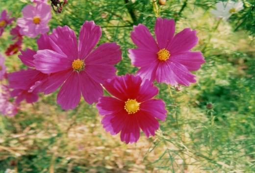 TOY-1055_Natura.jpg