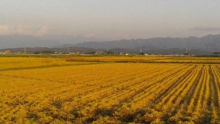 201509221658稲刈り
