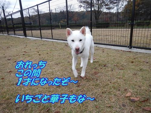 DSCN0422_20151119231356717.jpg