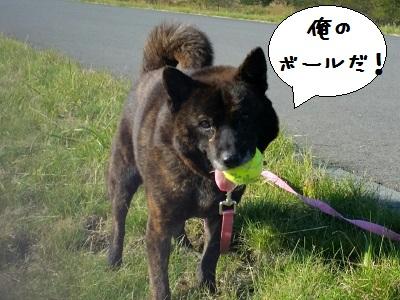 愛護フェス_3327