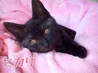 Hikari-18.jpg