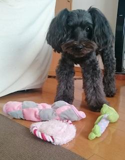 おもちゃ、、、
