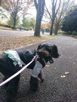 駒沢公園散歩