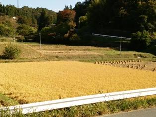 DSC_0854稲刈り1015