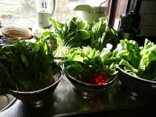 DSC_0953野菜ジュース材料