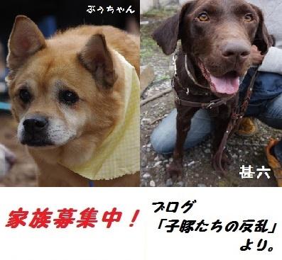 家族募集中20151027