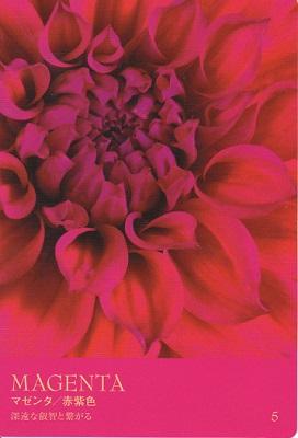カラーカード:マゼンタ