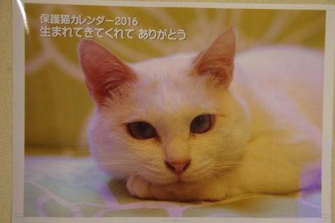 2016年カレンダー表紙