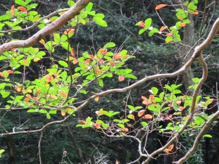 秋の初め、紅葉はじまり